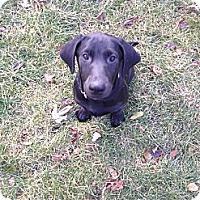 Adopt A Pet :: Zeta - New Boston, MI