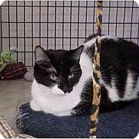 Adopt A Pet :: Moo-Lan - Deerfield Beach, FL