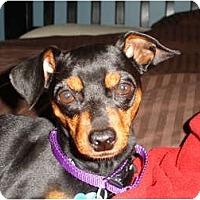 Adopt A Pet :: Baby - Nashville, TN