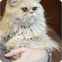 Adopt A Pet :: Maui - Columbus, OH