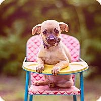 Adopt A Pet :: Trident - Austin, TX
