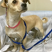 Adopt A Pet :: Maise - Phoenix, AZ