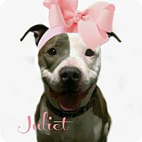 Adopt A Pet :: Juliet - Des Moines, IA