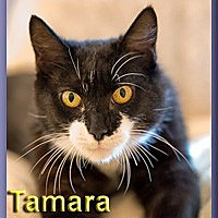 Adopt A Pet :: Tamara - Aldie, VA