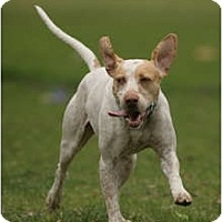 Adopt A Pet :: Hudson - Wood Dale, IL