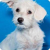 Adopt A Pet :: Janey - Phoenix, AZ