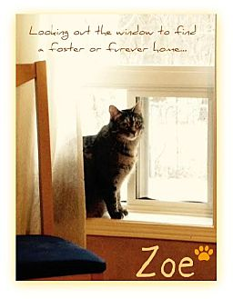 Domestic Shorthair Cat for adoption in Blackstock, Ontario - Zoe
