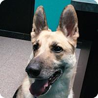 Adopt A Pet :: RAIN - SAN ANTONIO, TX