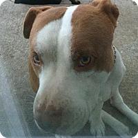 Adopt A Pet :: DUBEE - Antioch, CA