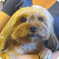 Adopt A Pet :: Selina - Salem, NH