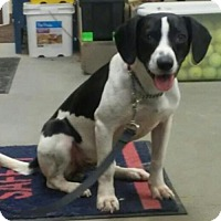 Hound (Unknown Type) Mix Dog for adoption in Middletown, Ohio - Brice
