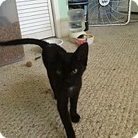 Adopt A Pet :: Sassy - Modesto, CA