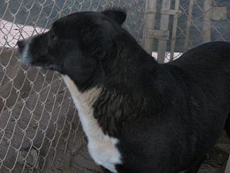 Labrador Retriever Mix Dog for adoption in Lancaster, California - Princess