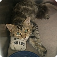 Adopt A Pet :: Aurora - Richboro, PA