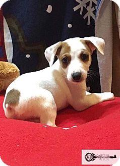 Shepherd (Unknown Type) Mix Puppy for adoption in DeForest, Wisconsin - Robin