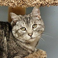 Adopt A Pet :: Minnie - Spokane Valley, WA