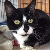 Adopt A Pet :: Ethel - Breinigsville, PA