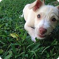 Adopt A Pet :: Winnie - Pennigton, NJ