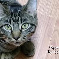 Adopt A Pet :: Kenai - Conroe, TX