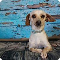 Adopt A Pet :: Danica - Yucaipa, CA