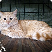 Adopt A Pet :: Simon - Marlinton, WV