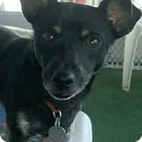Adopt A Pet :: Nike - PHOENIX, AZ