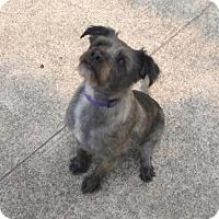 Adopt A Pet :: Sargent - North Bend, WA