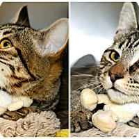 Adopt A Pet :: Bailey - Forked River, NJ