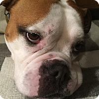 Adopt A Pet :: Lizzie - Richmond, VA
