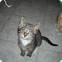 Adopt A Pet :: Luke - Riverside, RI