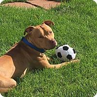 Adopt A Pet :: Carter - Wymore, NE