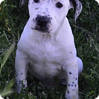 Adopt A Pet :: Crayon: Maroon - Corona, CA