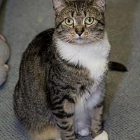 Adopt A Pet :: Clara Barton - Columbus, OH