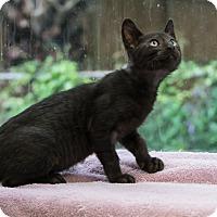 Adopt A Pet :: Rye - Houston, TX