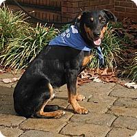 Adopt A Pet :: Bobby~Chaplin, CT - Adamsville, TN