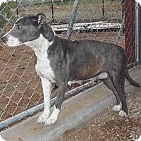 Adopt A Pet :: Penny - Post, TX
