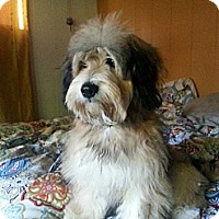 Adopt A Pet :: Reesie - Santa Monica, CA