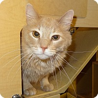 Adopt A Pet :: Leo - Bentonville, AR