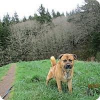 Adopt A Pet :: Sammy - Tillamook, OR