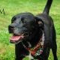 Adopt A Pet :: Jem - Columbia, TN