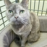 Adopt A Pet :: Cami - Edwards AFB, CA