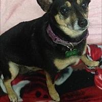 Adopt A Pet :: Chloe - Texarkana, TX
