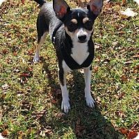 Adopt A Pet :: Dinah - Dayton, OH - Dayton, OH