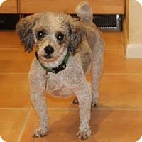 Adopt A Pet :: MIAMI MOE - Melbourne, FL