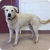 Adopt A Pet :: Moon - McDonough, GA