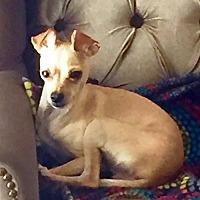 Adopt A Pet :: Cianni - Evergreen, CO