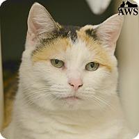 Adopt A Pet :: Cali - West Kennebunk, ME