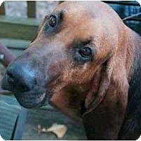 Adopt A Pet :: Duke - Washington, NC