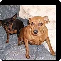 Adopt A Pet :: Katie and Brandi - Phoenix, AZ