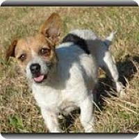Adopt A Pet :: Charlie - Brattleboro, VT